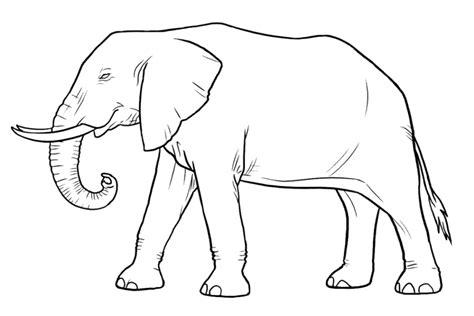 how to draw a doodle elephant malvorlagen zum ausmalen ausmalbilder elefant gratis 6