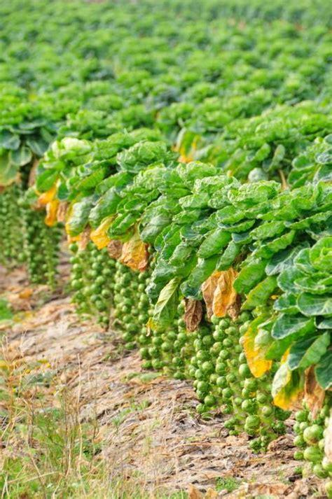 Legumes Qui Poussent Vite by Culture 9 Aliments Qui Poussent De Fa 231 On 233 Tonnante