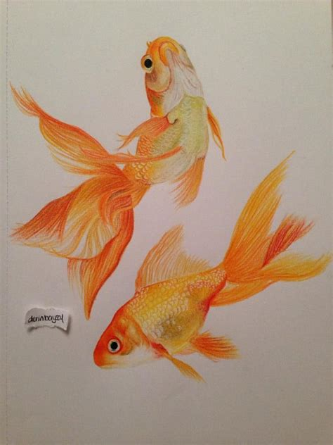 gold color pencil goldfish prismacolor premier colored pencils goldfish