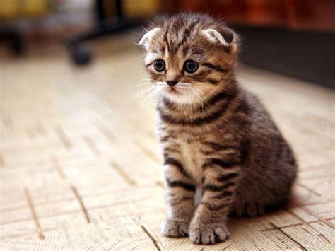 wann machen katzenbabys die augen auf die besten 17 bilder zu s 252 223 e tiere auf