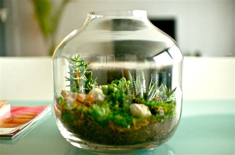 sprinkling decorating  succulents   house