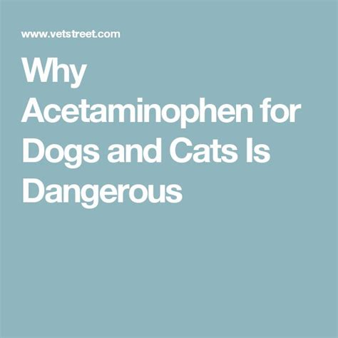 acetaminophen for dogs 1000 ideas about pet meds on puppies puppies discount pet supplies and dogs