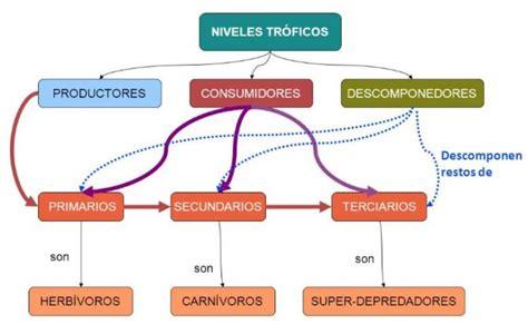 cadenas y tramas alimenticias y niveles troficos niveles tr 243 ficos productores consumidores y
