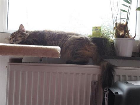 wohnung katzengerecht wohnung katzengerecht einrichten