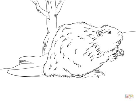 beaver coloring pages preschool beaver coloring page free printable coloring pages