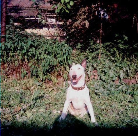 Фотографии пород собак с названиями пород