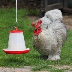 welk keukenafval voor kippen kippenvoer archives kippen houden