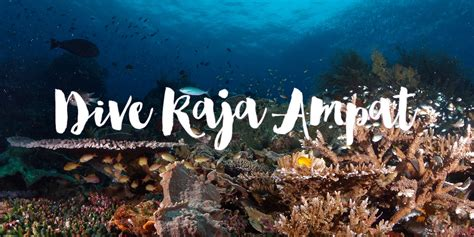 dive raja at liveaboard diving raja at liveaboard wanderlass