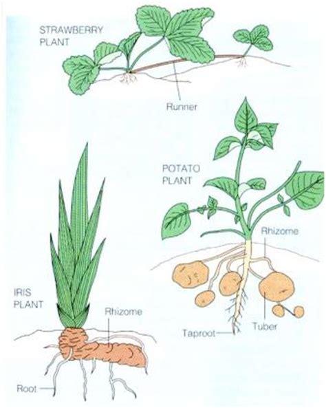 planty tanaman kita bersama