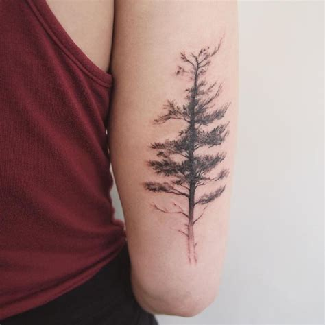 spruce tree tattoo 1000 ideas about pine on evergreen