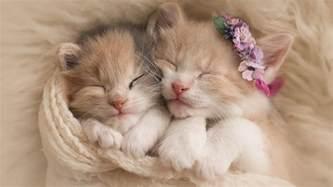 cute kittens adorable hd wallpaper wallpapersfans com