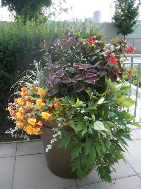 Design For Potted Plants For Shade Ideas Ogr 243 D Na Wyspach