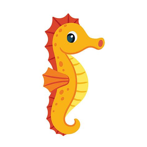 seahorse clip clipart seahorse pencil and in color