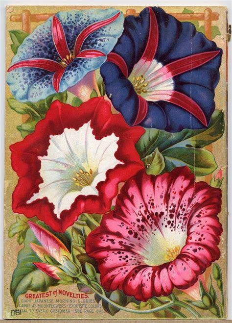 Vintage Seed Packet Seed Packets Pinterest Flower Garden Catalogs