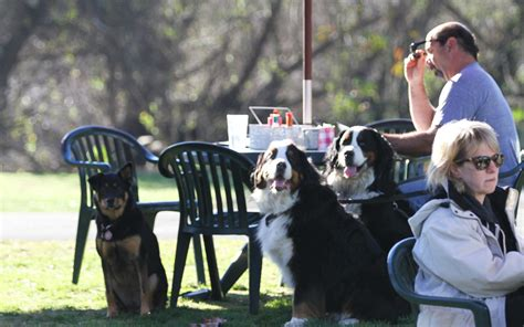 park bench cafe huntington beach the most dog friendly restaurants in the u s travel leisure