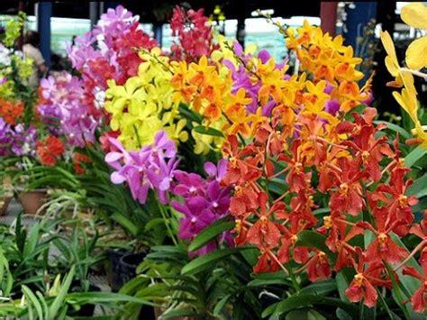 set   orchid garden carolina orchids service