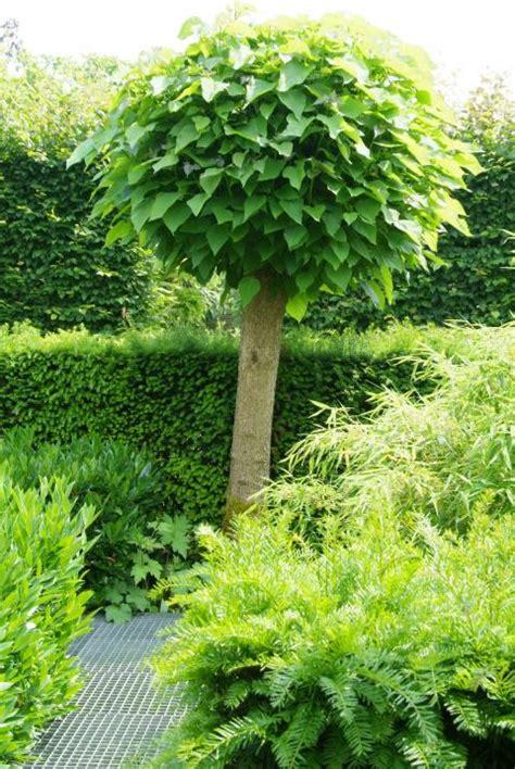 Boom Kleine Tuin by Kleine Bomen Voor Je Tuin