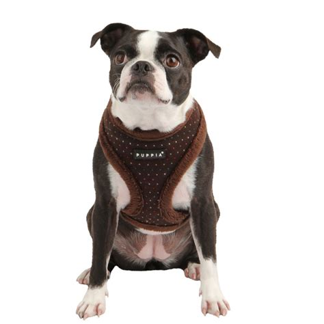yuppy puppy harness 7 yuppy puppy harness in biological science picture directory pulpbits net