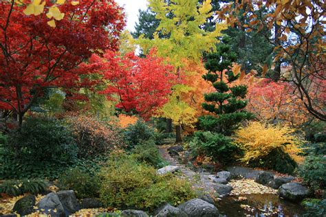japanese maples a spectacle of vibrant color garden supply co