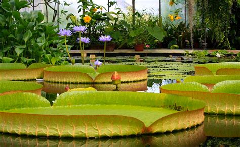 st pete botanical gardens botanical garden petersburg the best places to