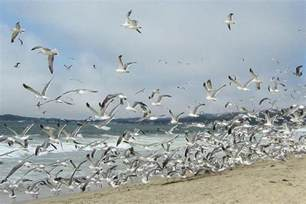 what does a flock of birds mean