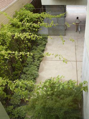 natural roof overhead  creating  vine trellis