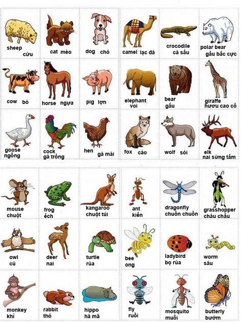 cuña in english từ vựng tiếng anh về c 225 c lo 224 i động vật