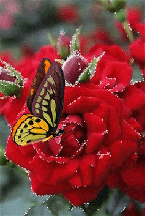 imagenes rosas con movimiento y brillo imagenes de flores con mariposas con movimiento