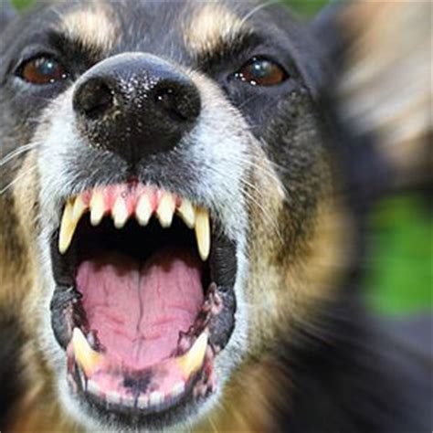 signs of rabies in dogs signs of rabies in dogs what you need to care