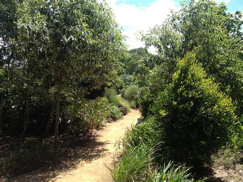botanical garden gold coast bganz botanic gardens open day 2017 gold coast