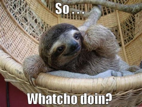 Cute Sloth Meme - cute sloth meme