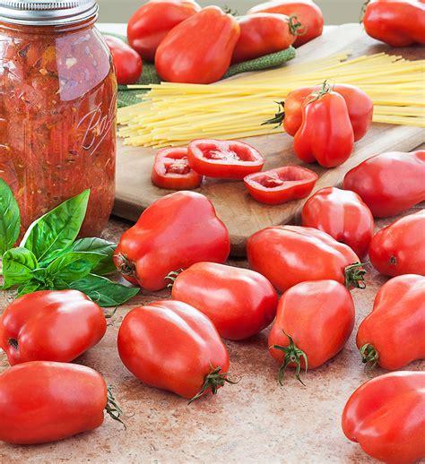 Planting Raised Garden Beds - san marzano tomato bonnie plants