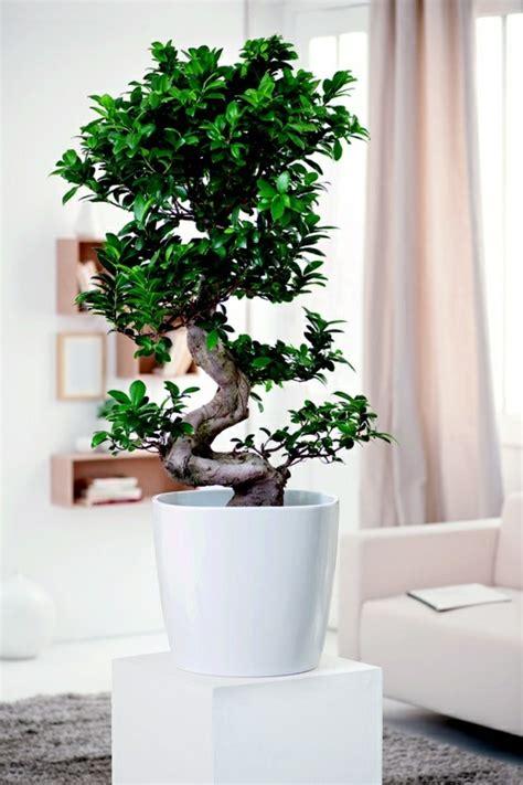 wohnzimmer pflanzen feng shui pflanzen f 252 r harmonie und positive energie im