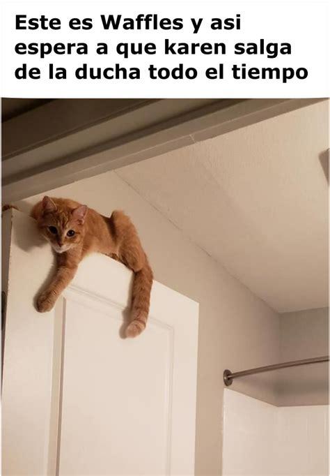 memes de karen  el gato en el bano memes en espanol la