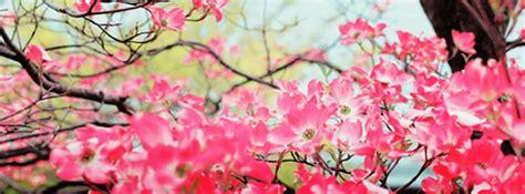 imagenes de flores bonitas para portada im 225 genes de flores para portada para descargar gratis