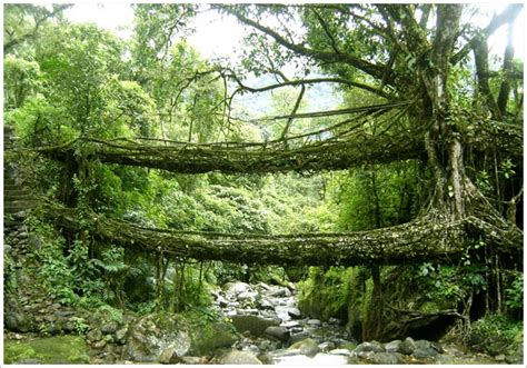 what is root bridge meghalaya india east of the east world travel buzz