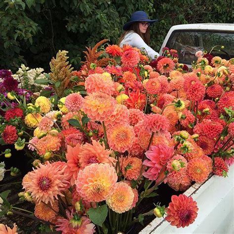 seasonal flower alliance november 9 floret flowers seasonal flower alliance september 7 floret flowers