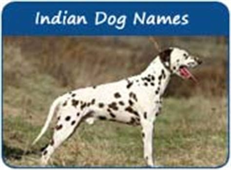 indian names for dogs indian names unique names of indian origin page 1