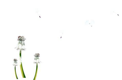 imagenes png naturaleza naturaleza imagenes en formato psd capas jpg y png