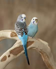 caring for your pet bird feeding cages mates