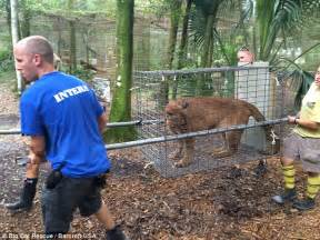 Backyard Zoo Nursed Back To Health After Rescue From Backyard
