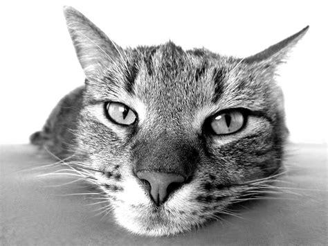 katze macht pipi ins bett unsauberkeit bei katzen abhilfe