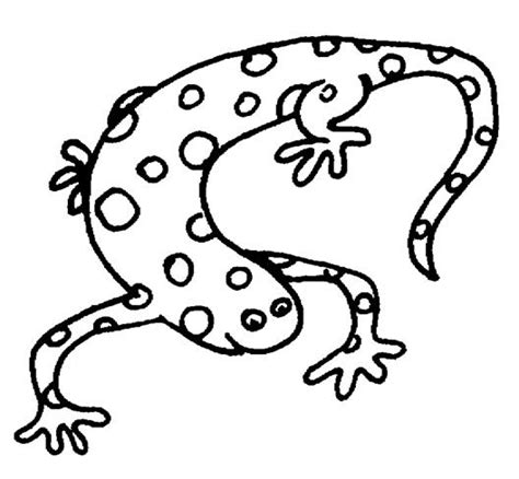 big lizard coloring page preschool children clipart black and white clipart panda