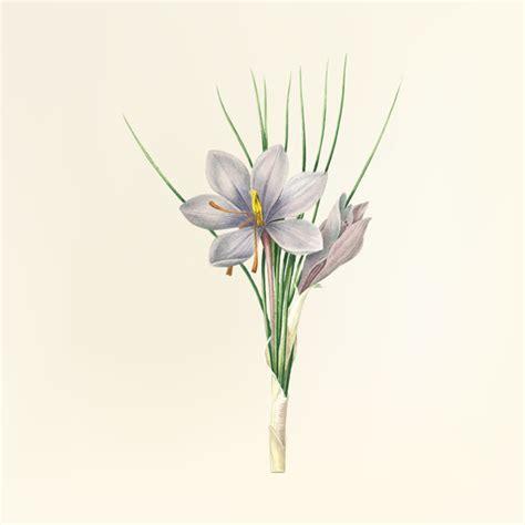 fiori di croco croco fiori foto e vettori gratis