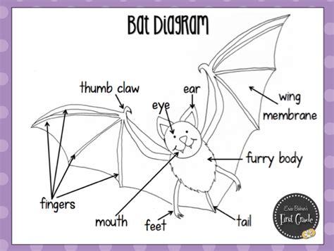 labelled diagram of a bat label bat diagram label free engine image for user