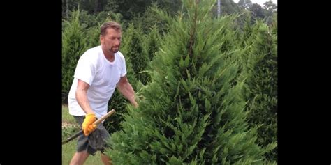 covington christmas tree farm the new best way to trim trees is with swords