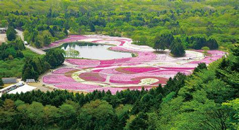 giappone in fiore viaggio in giappone per la fioritura dei ciliegi il