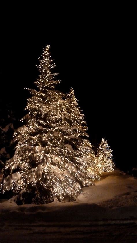 Outdoor White Lights The Magic Of Outdoor Lights In The Snow This I Want Trees Outside To Decorate