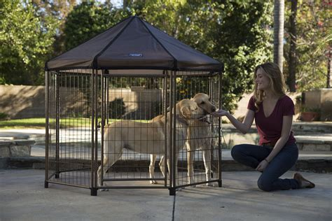best outdoor dogs finding the best outdoor kennel for your pet advantek