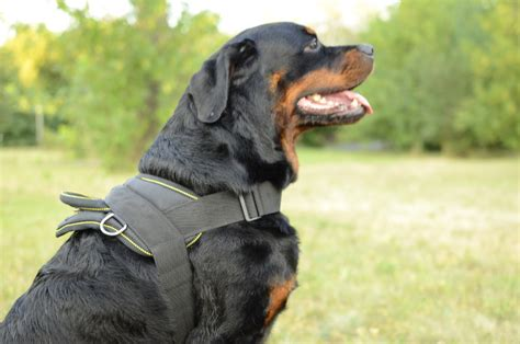 harness for rottweiler rottweiler harness for multi purpose use harness uk